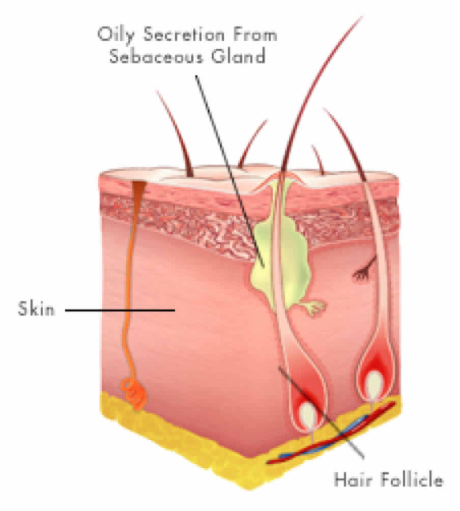 hair follicle diagram 28 images understanding hair growth basics njoy essentials  hair Eye Structure Accesory Lacrimal Structures