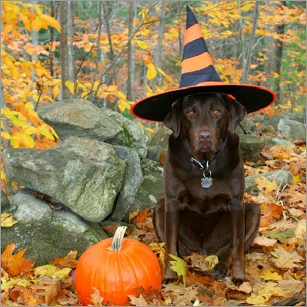 Funny halloween animals 2