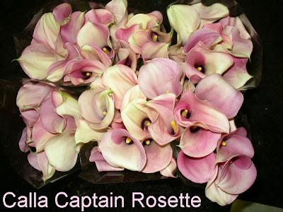 Calla Captain Rosette