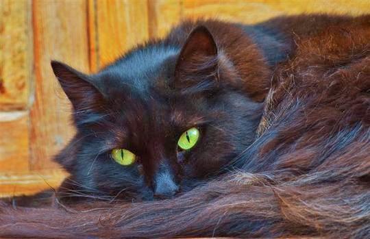 Tazacorte cat