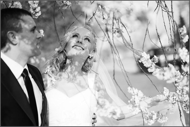 vestuvinė fotosesija prie žydinčių vyšnių ir obelų