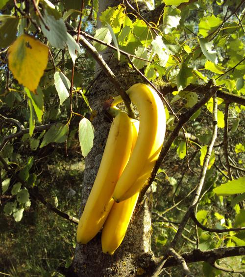 Banany z białą czekoladą z grilla