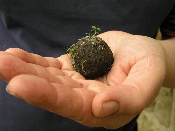 Seed Bombs - для партизанского озеленения города