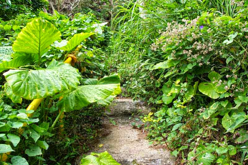 handrails, trail, jungle, steps
