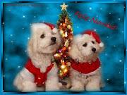 Tarjetas de Navidad y Año Nuevokartki świateczne w j. hiszpanskim