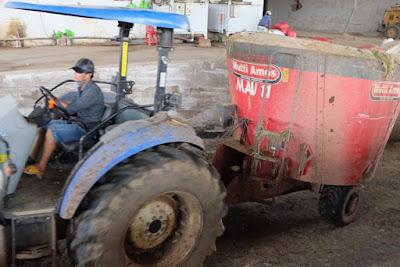 Thức ăn sau khi được trộn đưa đến từng chuồng bò. Một chiếc xe máy xúc được 1 công nhân vận hành có thể phục vụ 1000 con bò một ngày, với tất cả các công đoạn.