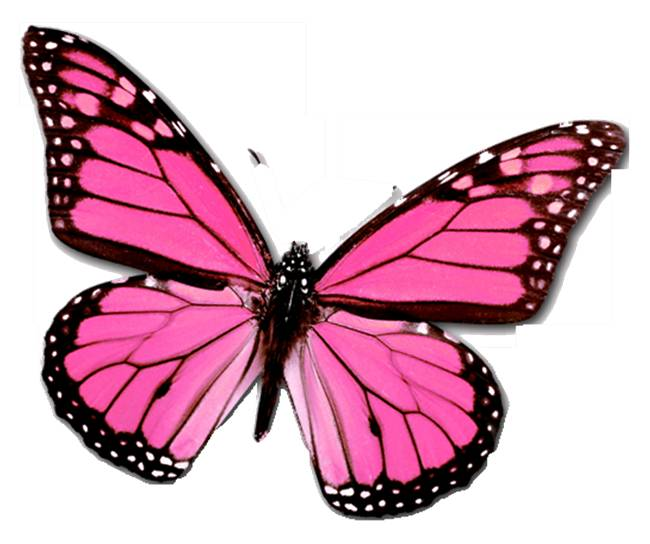 Butterfly Drawings With Color Pink Parlez-Vous Ongles?: C...
