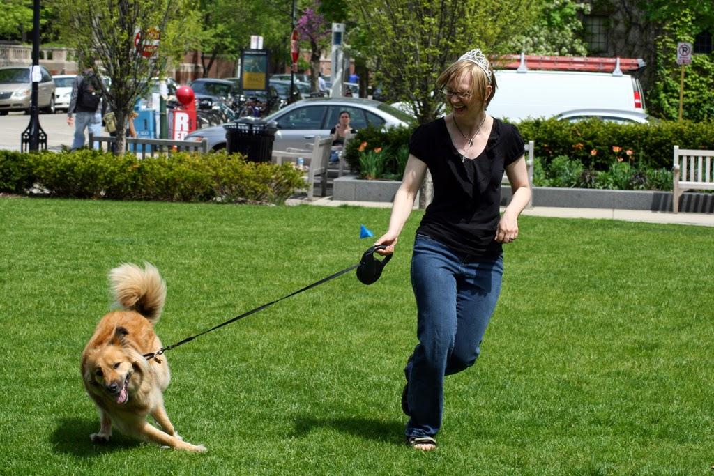 Image Result For Aggressive Dog Behavior