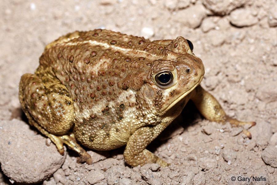 Q Significa Toad Spectrum: 2/8/15 - 2/1...