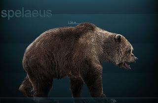 Animales de las Cavernas Ursus_spelaeus