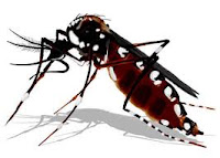 Mosquito+dengue.jpg