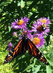 Spot the Pollinators