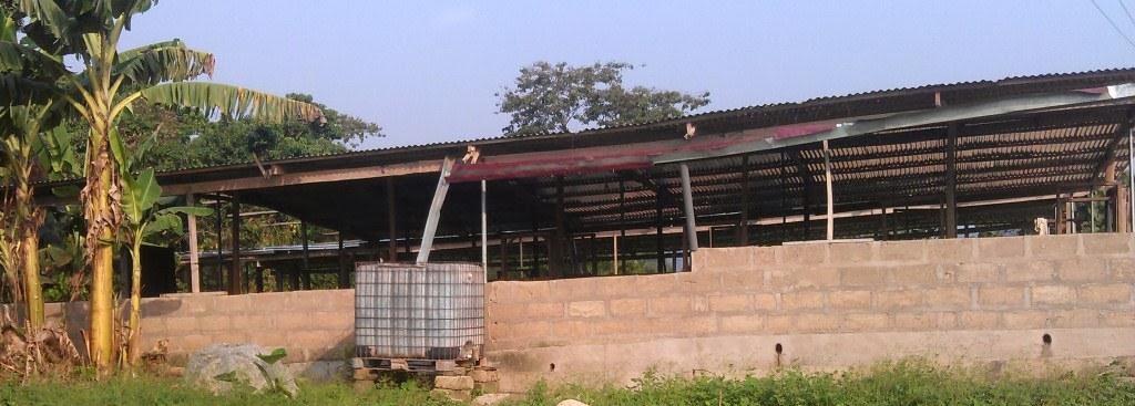 Pig Farming In Ghana Two Years Into Pig Farming Part 3 Housing Mechanic (farming part 3) görevini bu videomuzda izleyebilirsiniz. pig farming in ghana