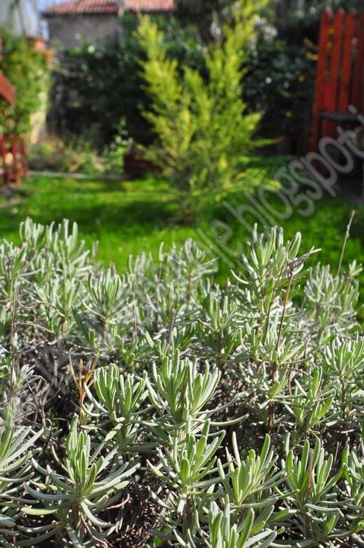 Le cucicoccole cuscini da giardino cushions for garden - Cuscini da giardino ...