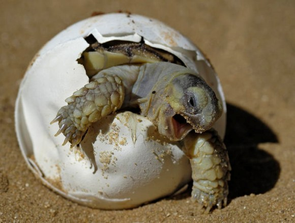 Turtle Cages: Turtle Care - Tips for Raising Healthy Baby Turtles ...