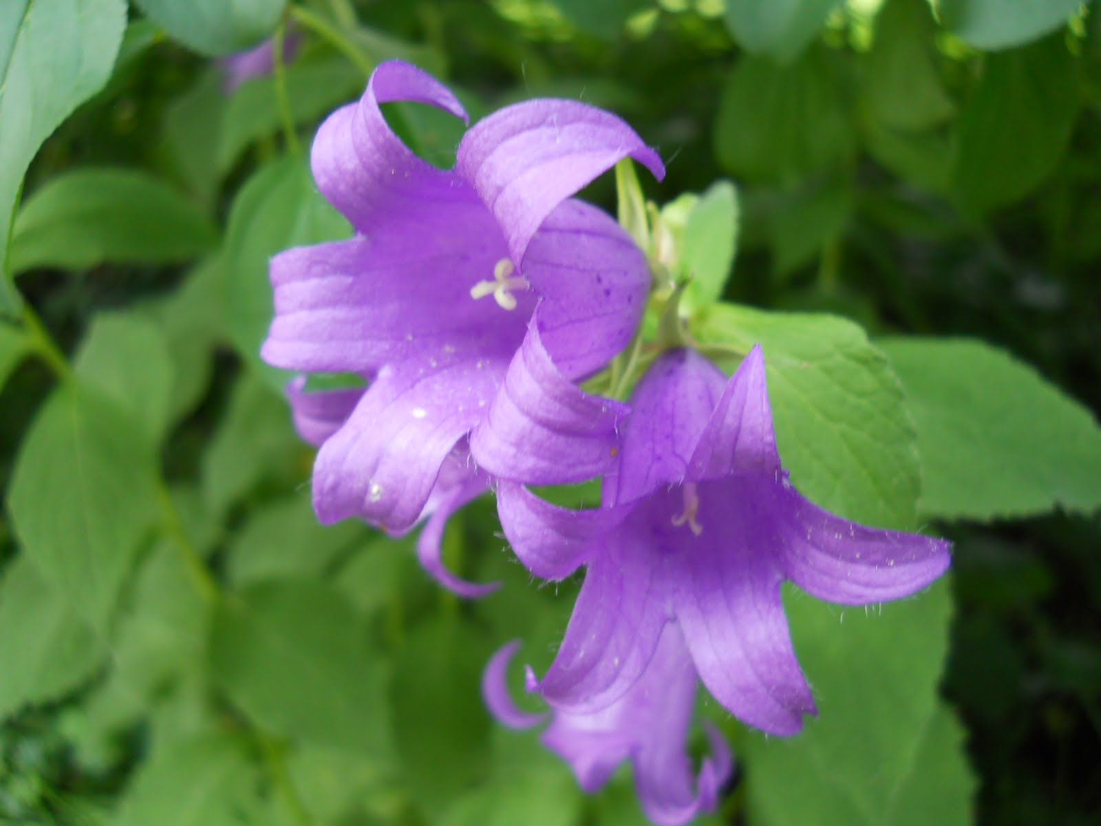 Ellen's Tumbleweed Journal: Summer Time Flowers