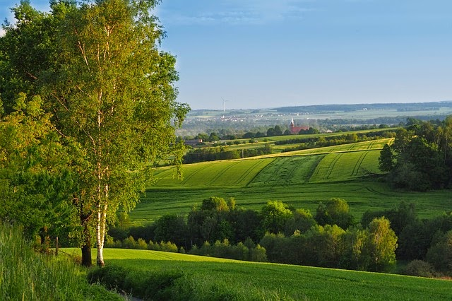 pradera verde