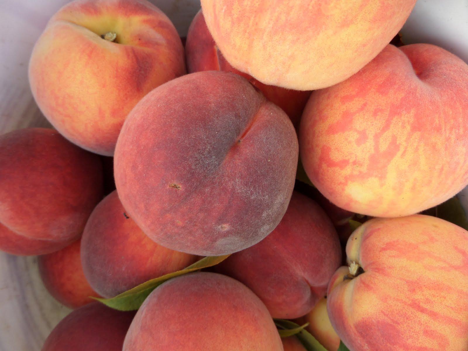 100 g owoców to 39 kalorii, ale 100 g suszu to już 276 kalorii