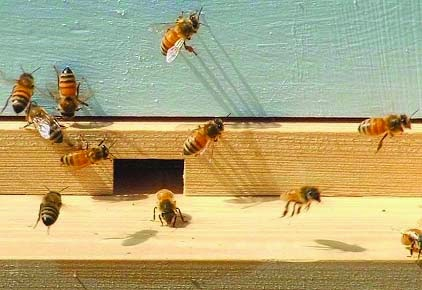 civil rights secret life of bees Set in the american south in 1964, the year of the civil rights act and  intensifying racial unrest, sue monk kidd's the secret life of bees is a.