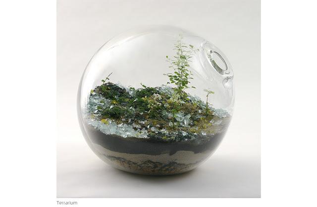 Terrariums - Paula Hayes