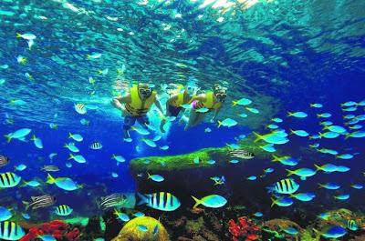Resorts World Sentosa bersiap buka akuarium lautan terbesar dunia