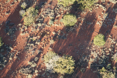 Deer in Coconino Forest – View from Balloon