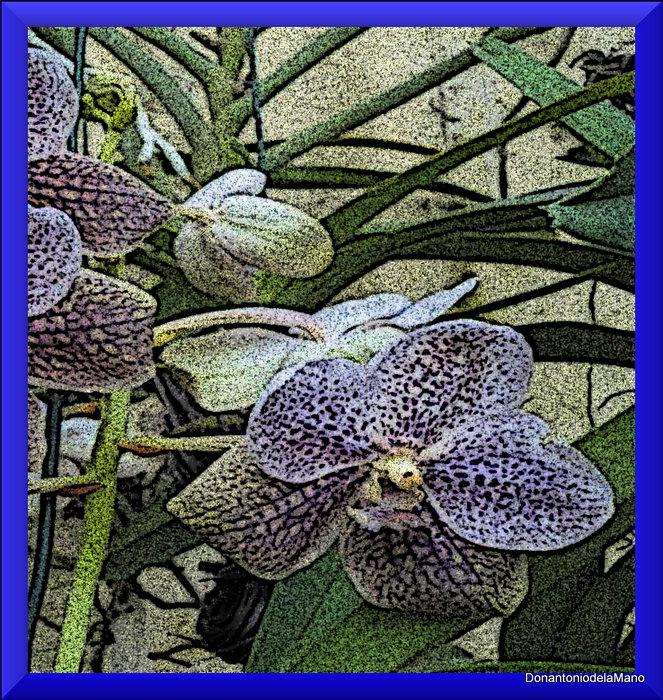 Orquídea 14