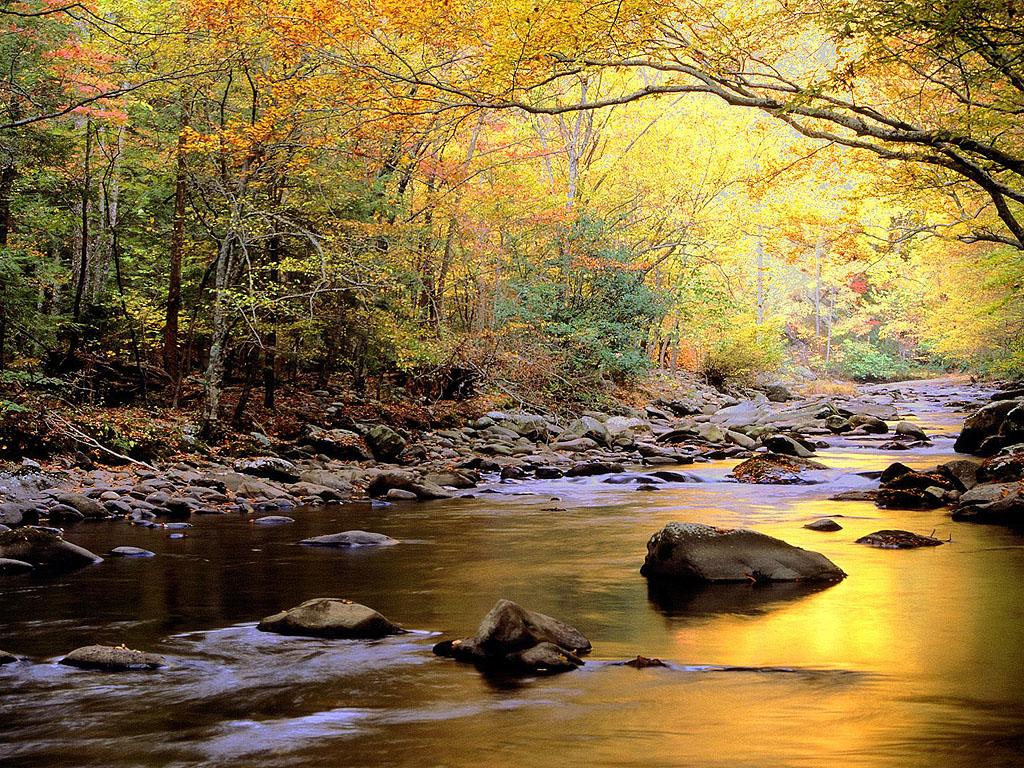 http://3.bp.blogspot.com/-89-lrxcG1YY/TkDlc1WaQCI/AAAAAAAAAGU/I2pbctW3veQ/s1600/golden-river-wallpaper.jpg