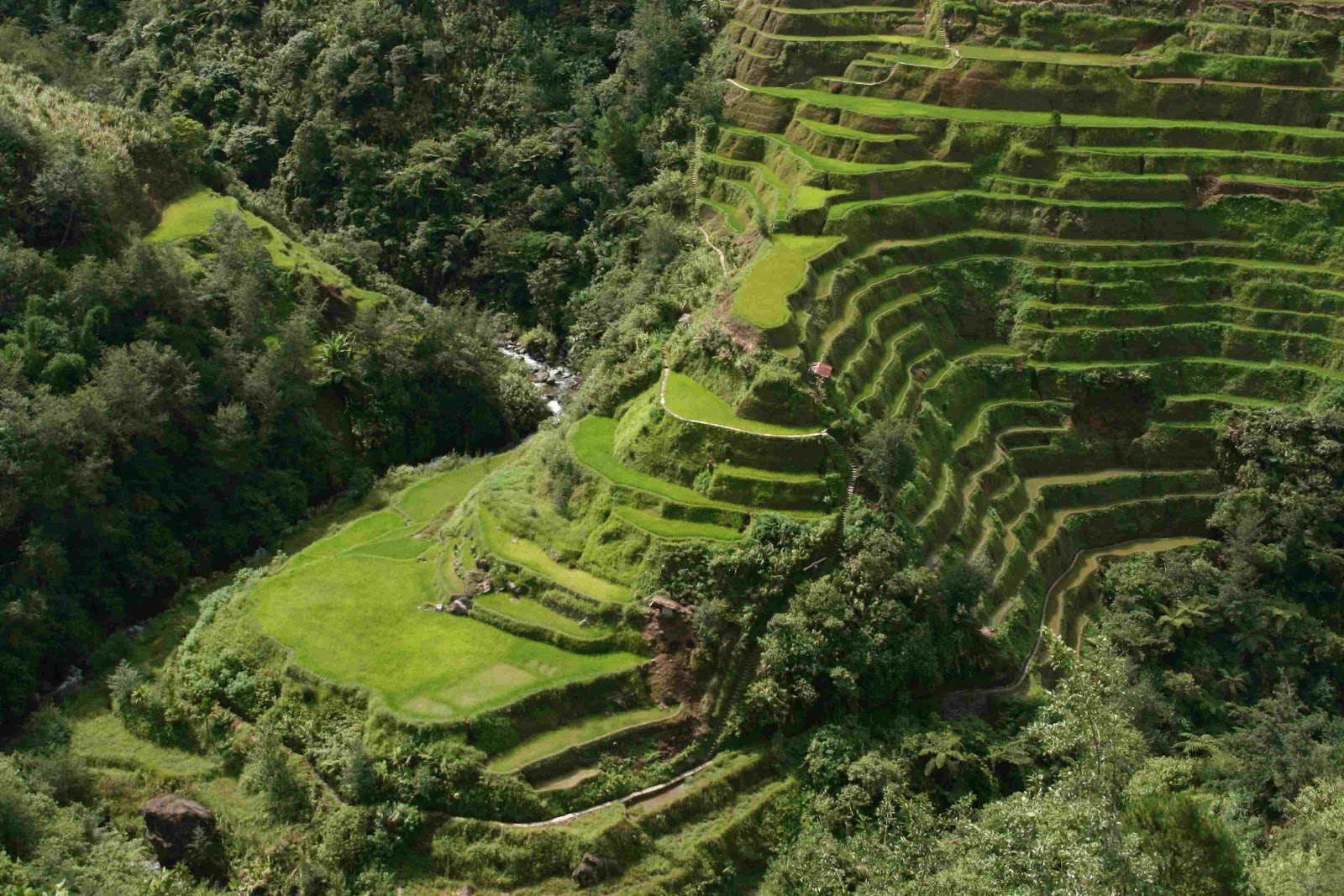 World beautifull places the rice terrace fields of banaue for Terrace images