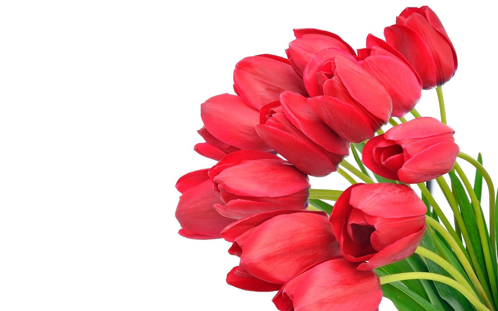 Beautiful flowers wallpapers latest news beautiful flowers wallpapers posted by waqas97 0402 1 wallpapers izmirmasajfo