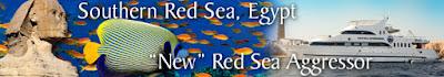 Red Sea dive trip