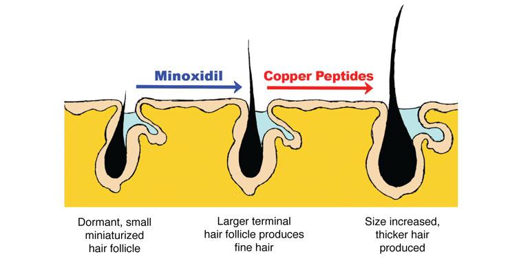 Fast do follicles grow clomid