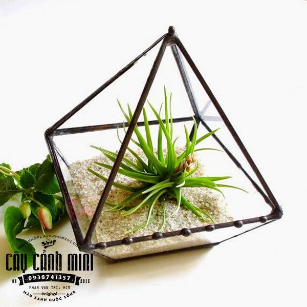 Cây không khí thủy tinh tam giác