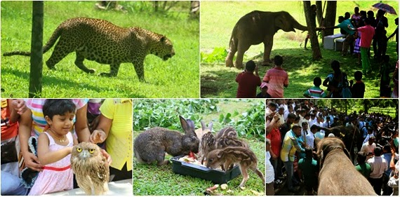 Sri Lanka's first Open Air Zoo in Pinnawala
