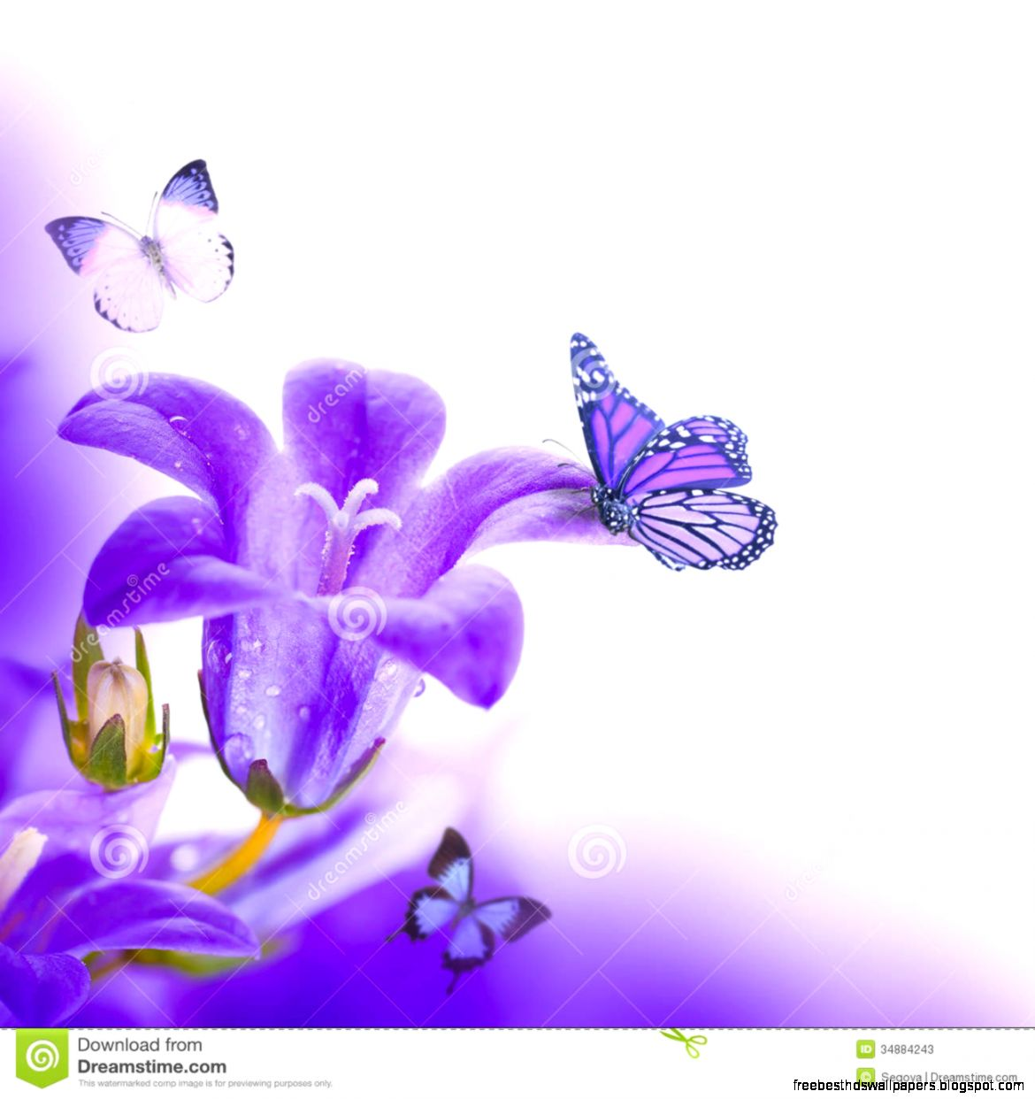 Purple flower background with butterfly free best hd wallpapers view original size background flowers stock images image 37569854 mightylinksfo