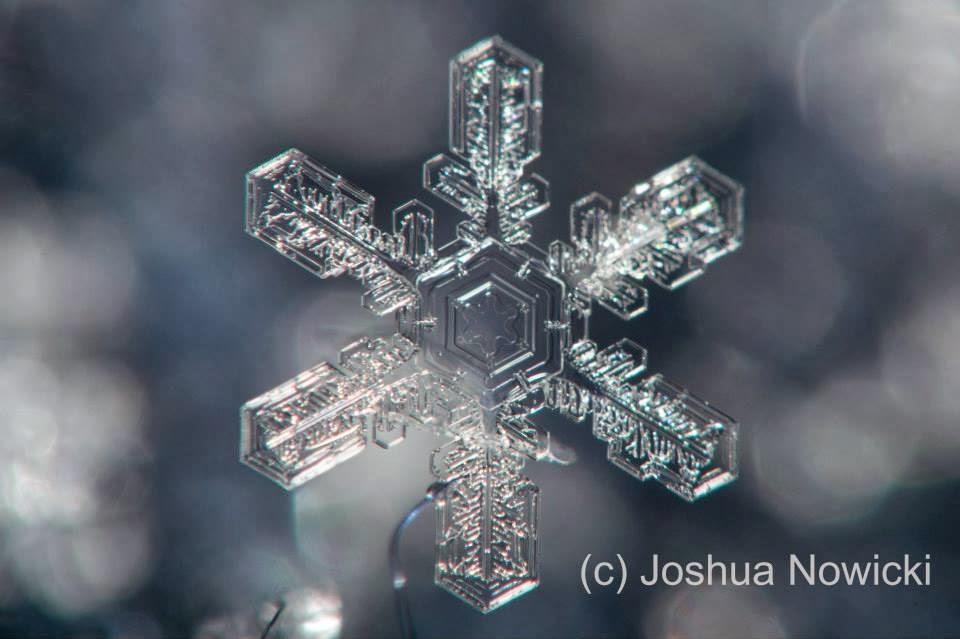 FOTO: Kepingan Salju Saat Cuaca Buruk di Amerika