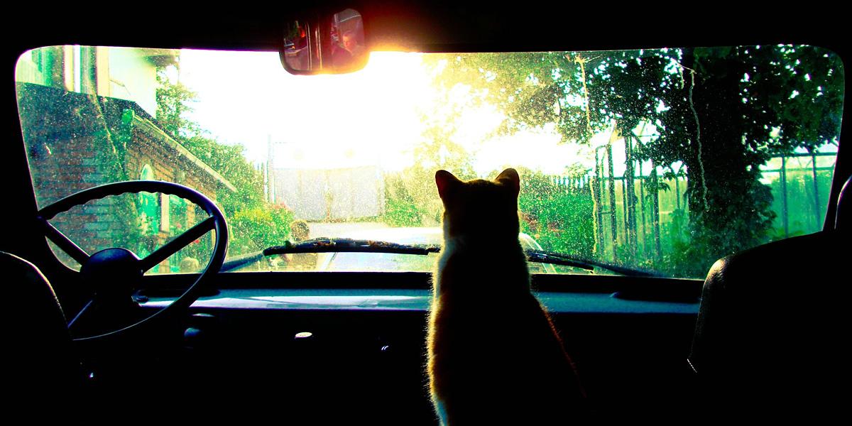 Sun Cat 300+ Muhteşem HD Twitter Kapak Fotoğrafları