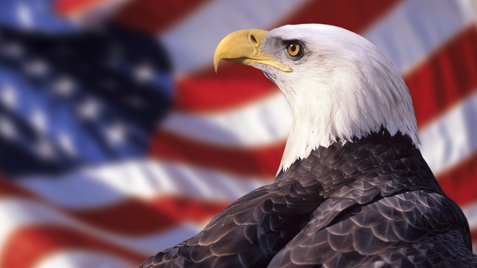 http://3.bp.blogspot.com/-8AL8vkJMEro/T_Q2eK-9-9I/AAAAAAAADzg/PClFTNHmIZk/s1600/Bald+eagle+wallpapers+5.jpg