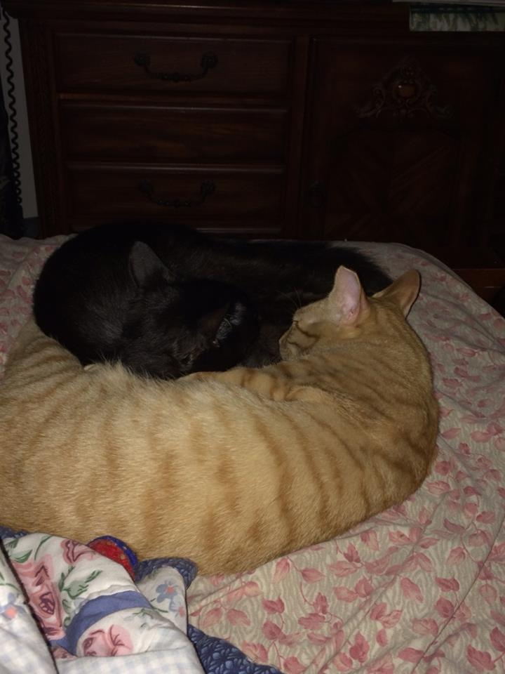The Yin and Yang of Cats