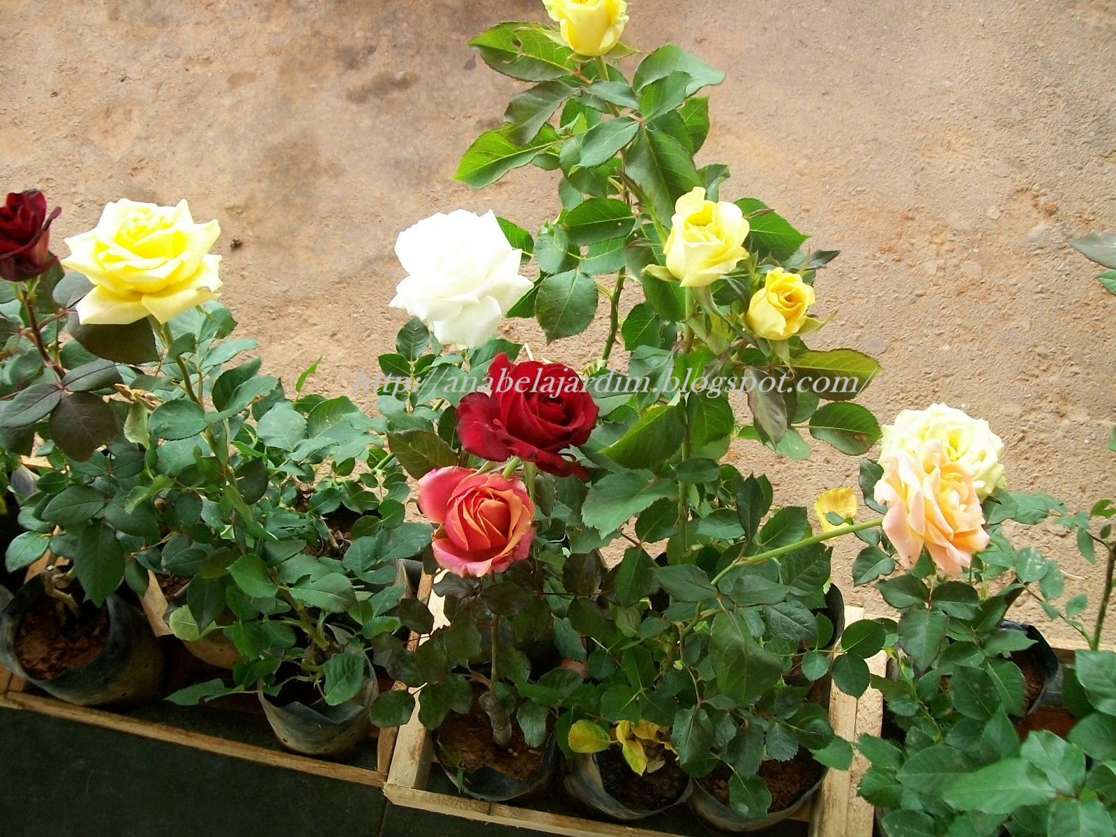 Extremamente Blog da Anabela Jardim: Made in Barbacena GD32