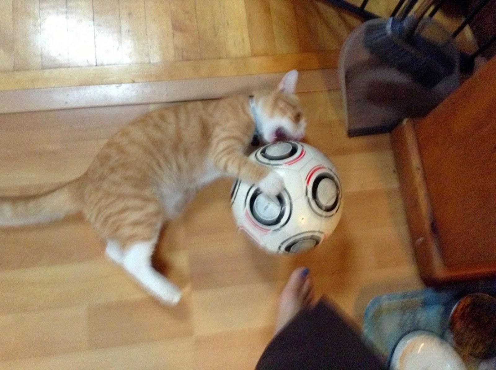 Dimitri cat soccer
