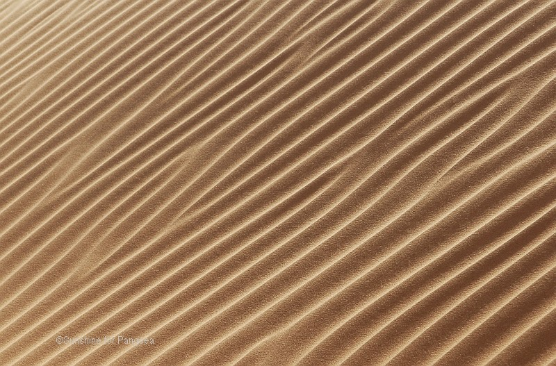 Sand dune in the Sahara