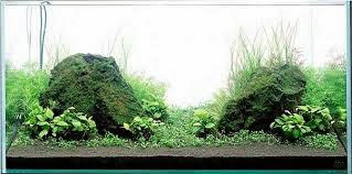 http://www.hocathaiduong.org/2014/12/ho-ca-kieng-dep-ho-ca-kieng-ep-gia-re.html