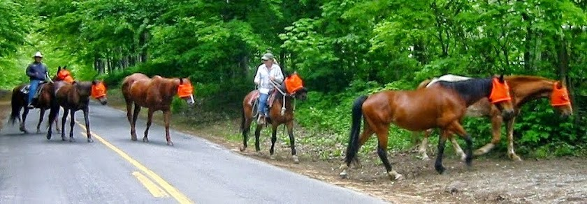 Mary Dixon Horse Riding Blog - Adventure Horse Riding in NYS