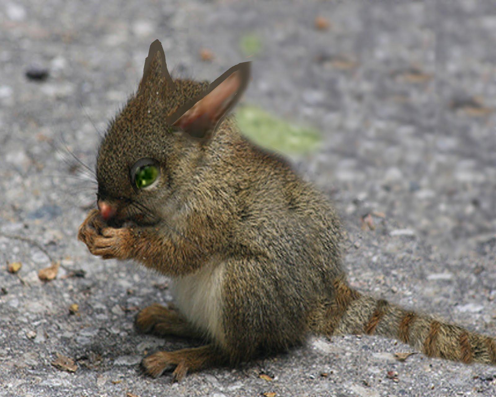 rarest animals in the - photo #30