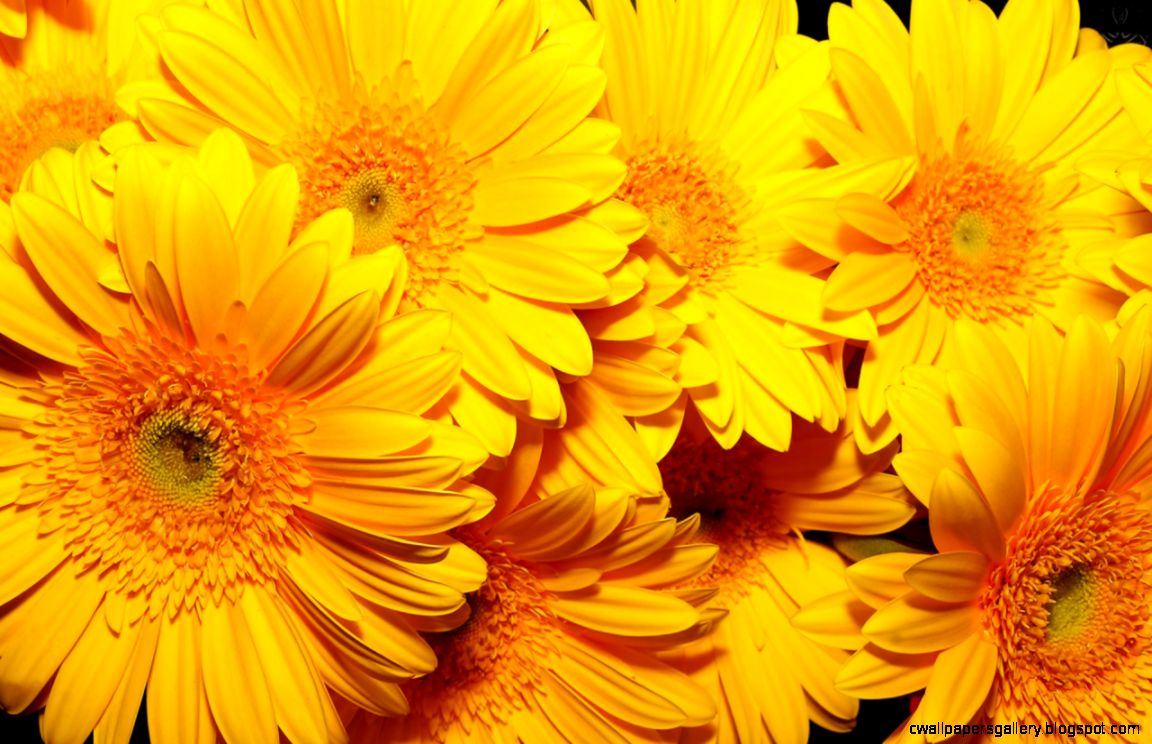 HD Flowers Wallpaper For Desktop 7000598