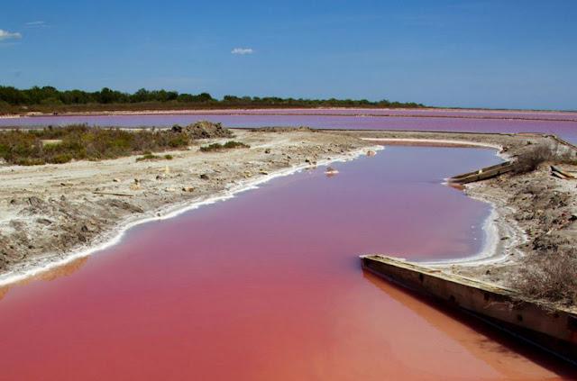 بحيرة في كامارغ في فرانسا تتحول إلى اللون الأحمر pinksaltlake04.jpg