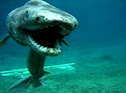Rarest Marine Deep Sea Creatures Frilled Shark