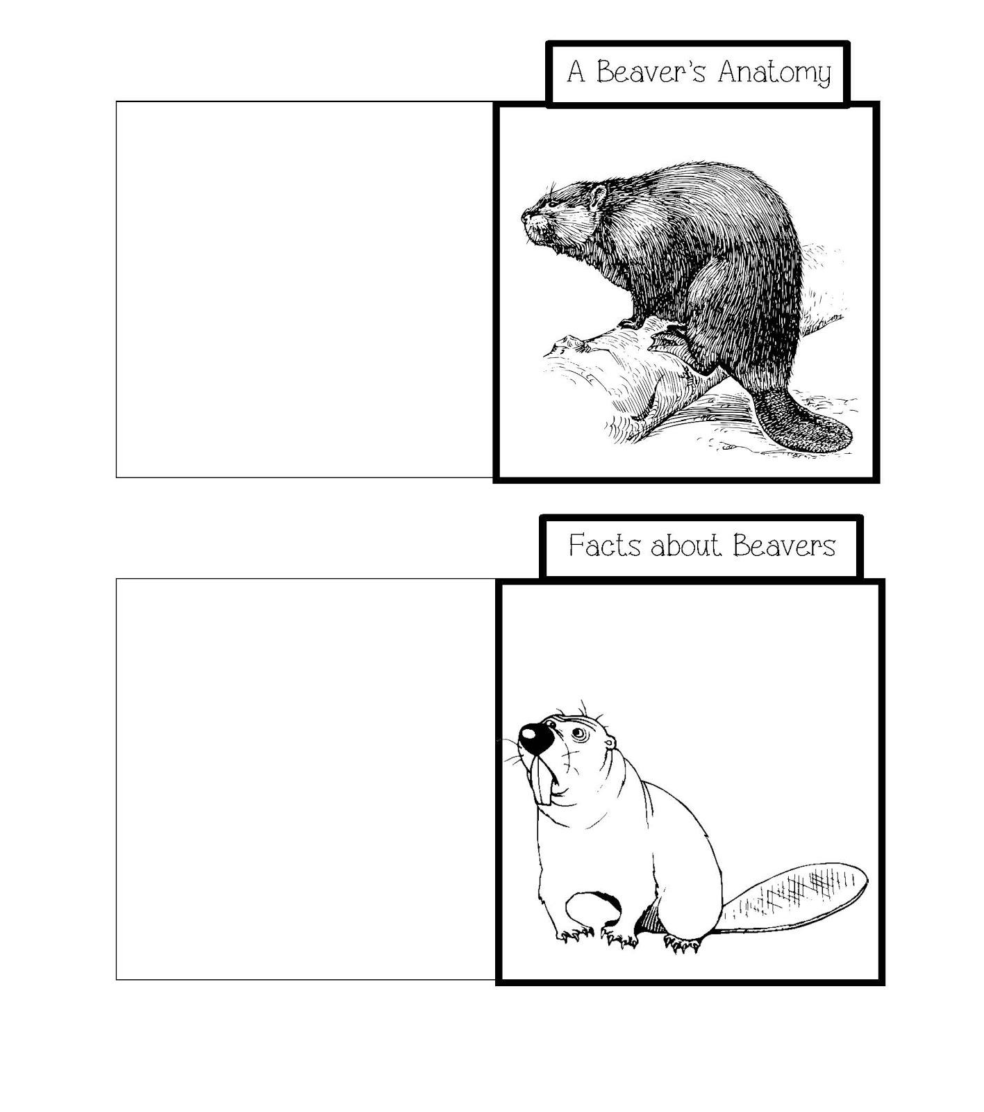 The Hermit Crabs Homeschool: Beavers Lap Book