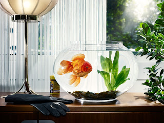 Aquarium Goldfish Algae Gloves Window HD Wallpaper